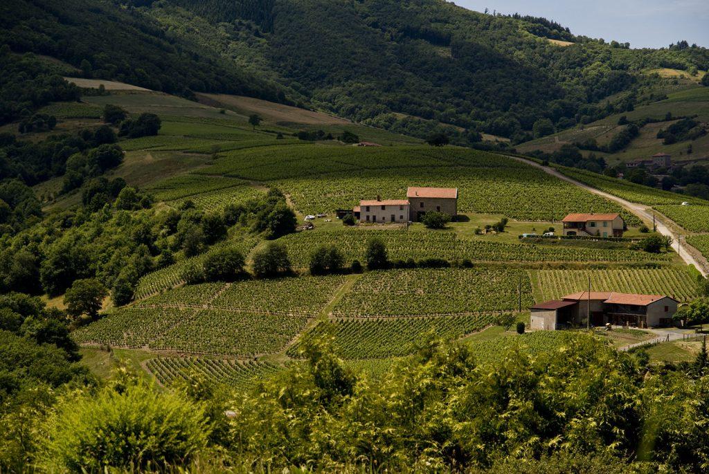 Beaujolais wine country