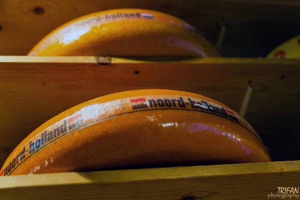 Amsterdam cheese gouda