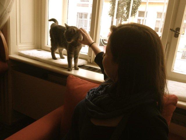 Cats in Prague - Kockafe Interaction