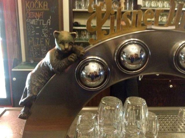 Cats in Prague - U Dvou Kocka