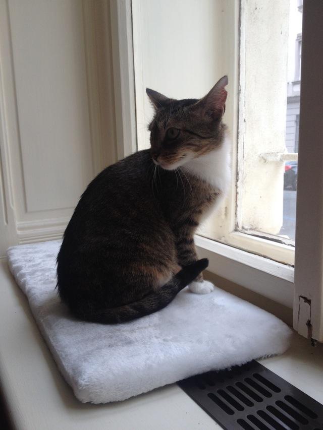 Cats in Prague - Window Cat
