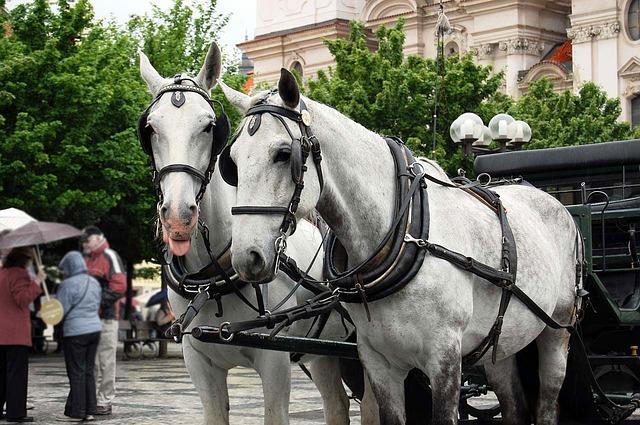 romantic_carriage_ride_prague