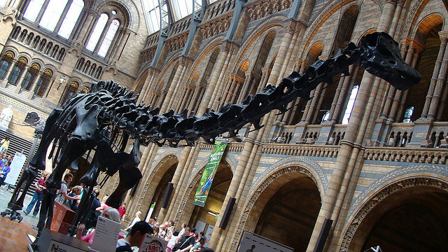 Diplodocus at the Natural History Museum, one of London's free attractions