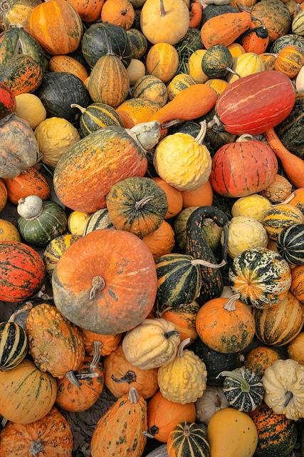 London food in autumn pic by Matt Shalvatis