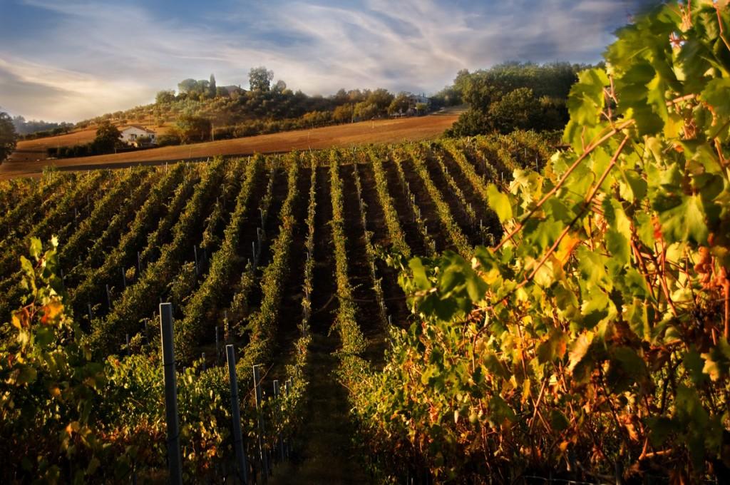 chianti-vineyards-wine-tuscany-food-1024x68011